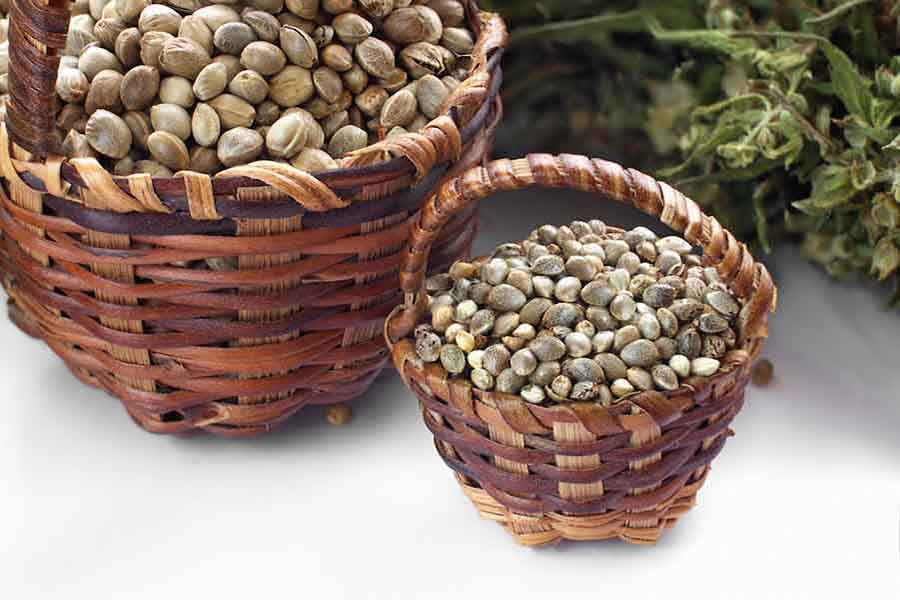 3. 7 sources of protein 2 hemp seeds