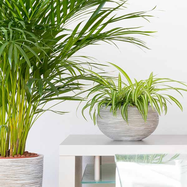 bigstock Two House Plants In Front Of A 227408404