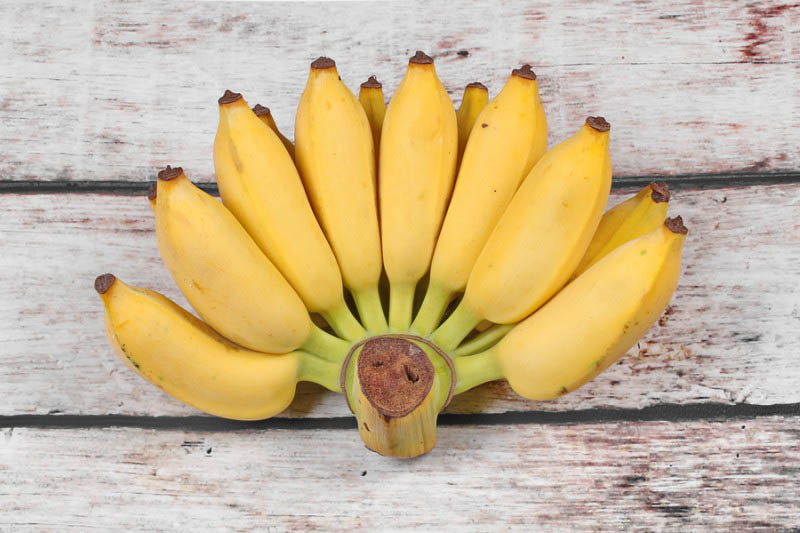 bigstock Yellow Cultivated Banana Ripe 176003806 resize