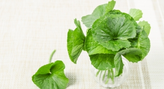 Gotu Kola (Pegaga): 4 Amazing Benefits Of This Ancient Skin Repairing & Brain Boosting Herb