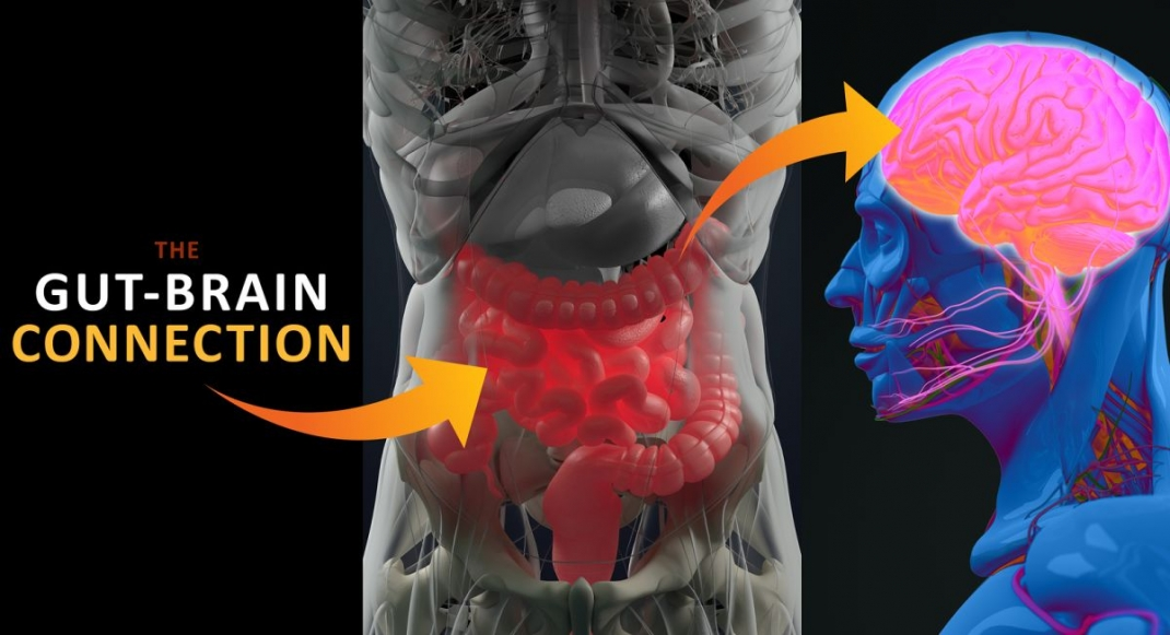 Is Our Gut Our 2nd Brain? The Mind-Gut Connection Explained