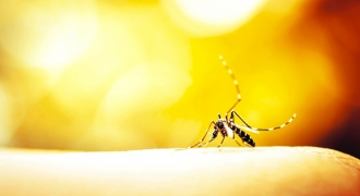 The Zika Virus - Should It Concern You? [Updated]