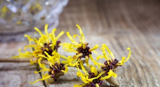 The Wonders of Witch Hazel