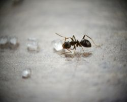 5 Natural and Non-Toxic Ways To Get Rid Of Ants