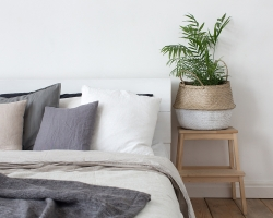 5 Plants That Will Improve Air Quality In Your House, Even As You Sleep