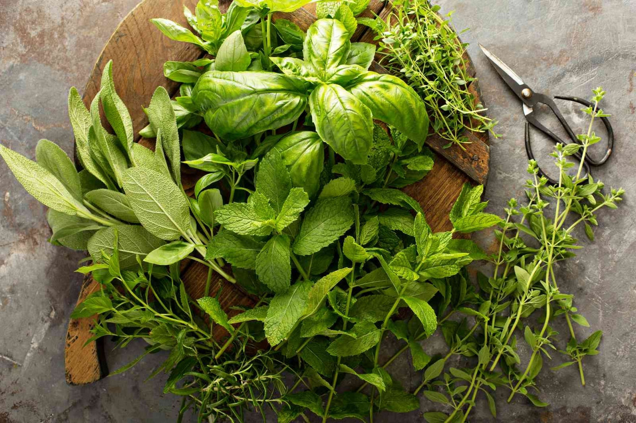 7 Herbs to Naturally Boost Your Immune System