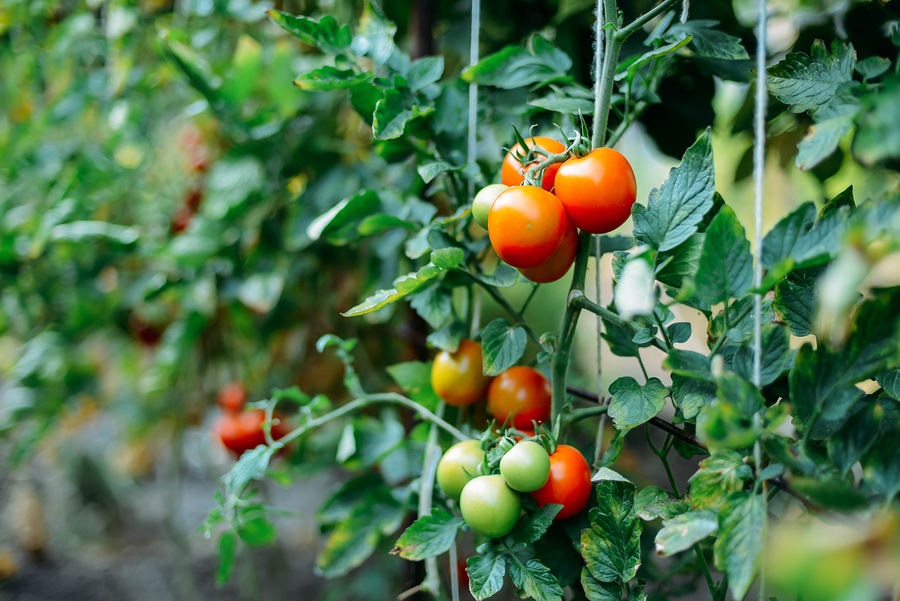 Don't Have A Garden? Here's How To Grow Your Own Food On Your Balcony